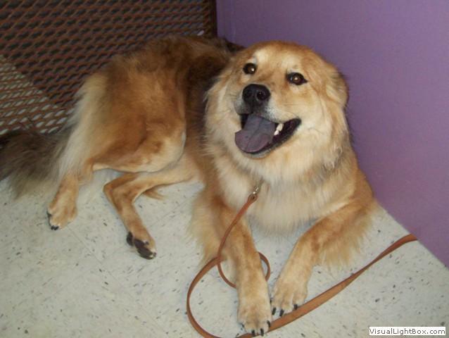 Debs Dog Grooming Owner